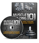 Muscle Building 101 (PLR/MRR)